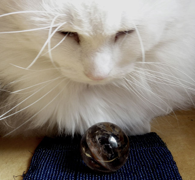 Photograph of a white cat looking into a crystal ball