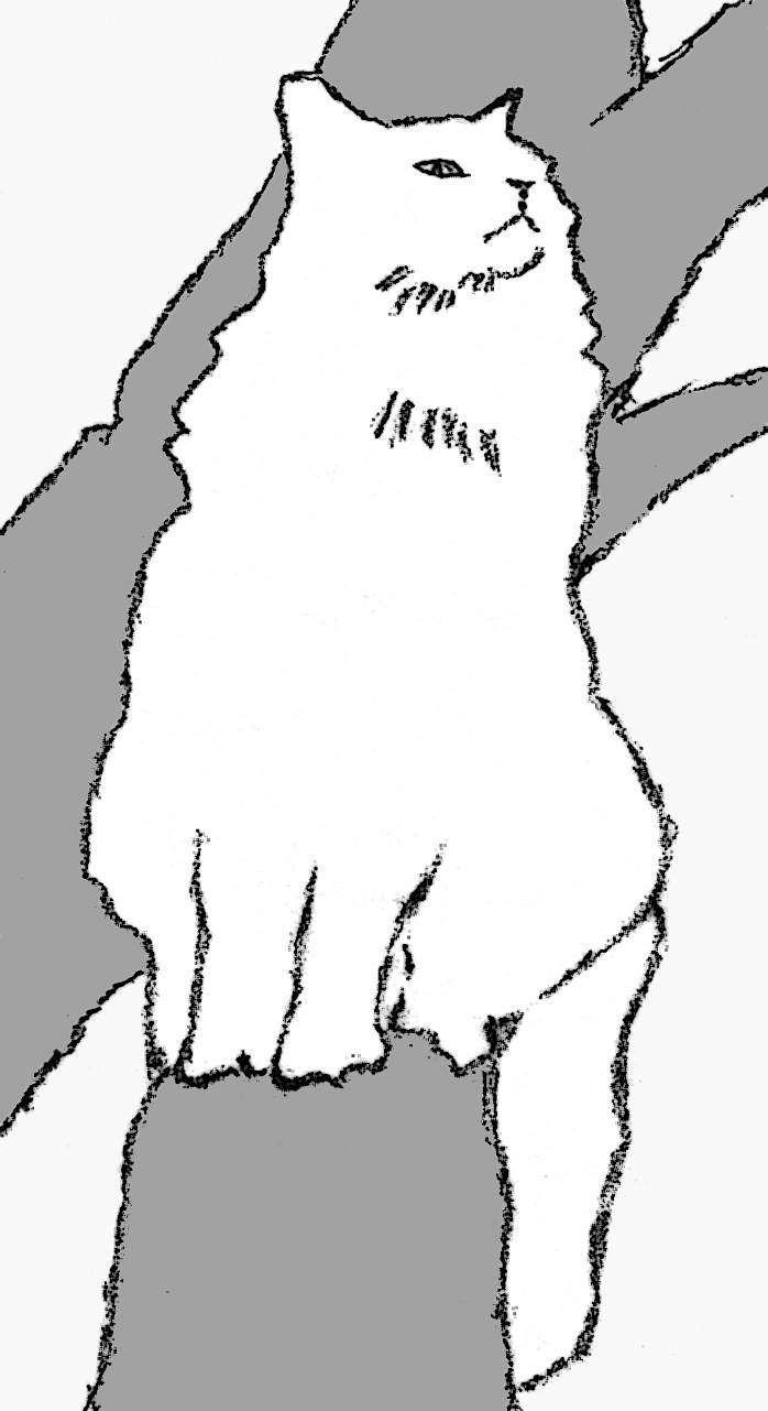 Drawing of white cat